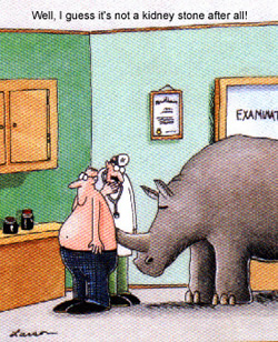 The Far Side: Kidney Stone